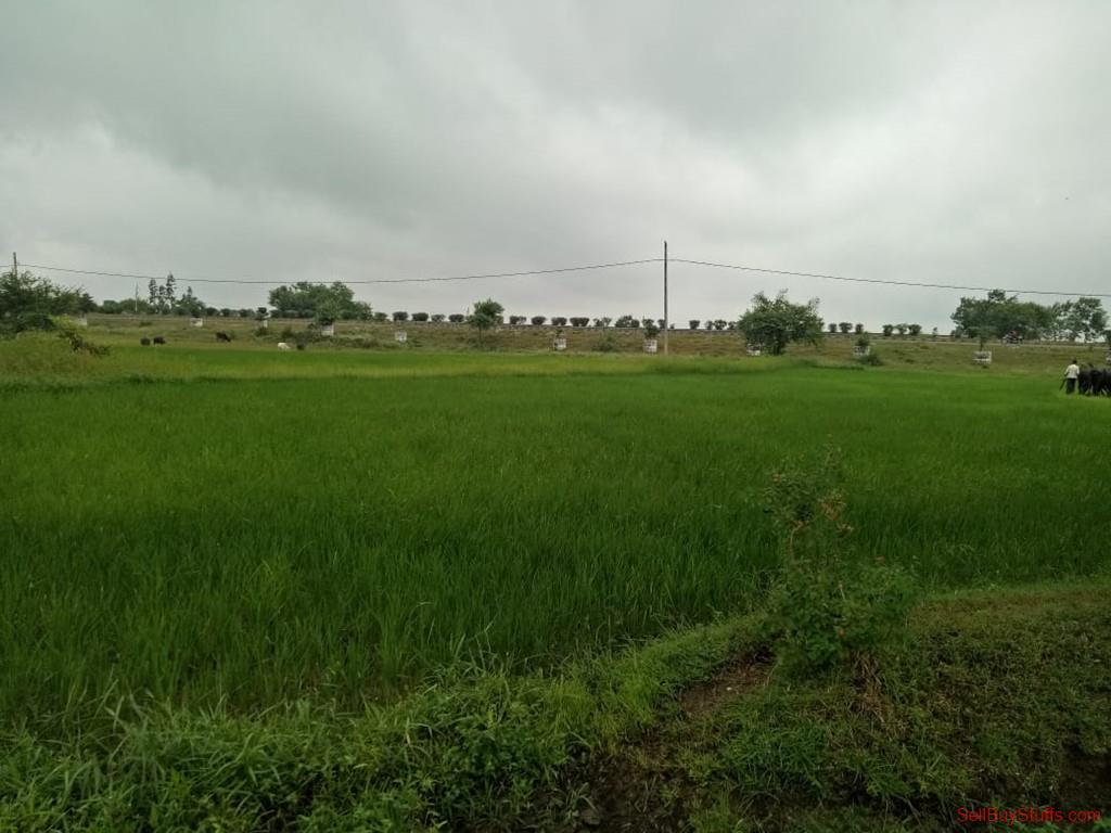 Seoni 49 acres Land for sale